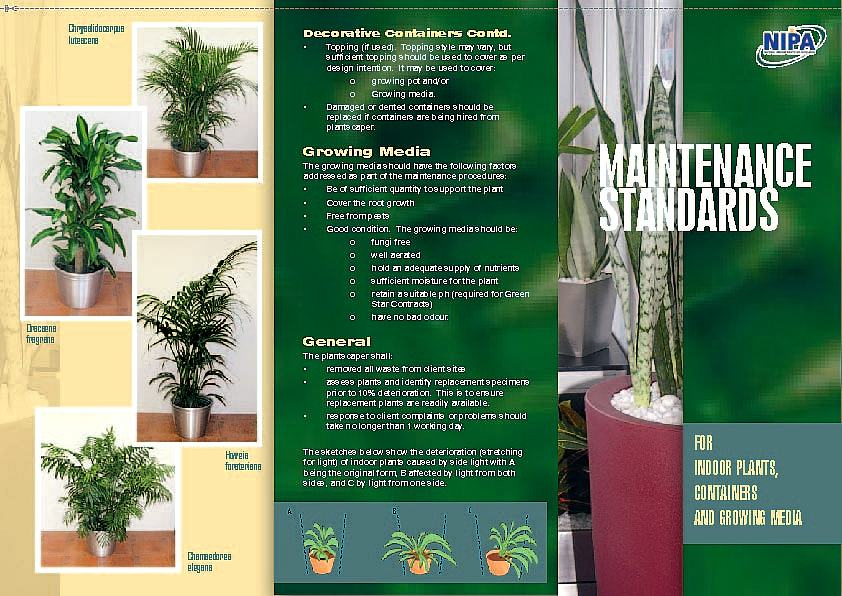 Indoor Plant Maintenance Brisbane And The Ipa Standards