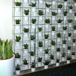 Schiavello Vertical Garden with Sansevieria Hahnii and white full gloss pots