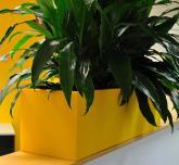 Pineapple trough
