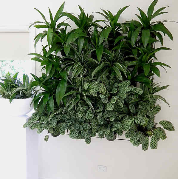 Showing an Eco Green Wall with a mass of green.