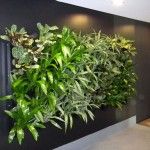 Eco Wall. Photo courtesy Green Design Indoor Plant Hire Sydney.