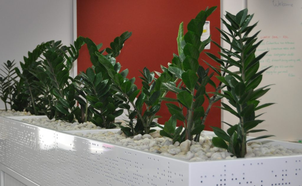 Showing Tambour Cabinet Planters with white pebbles and a red background.