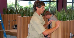 An image of a technician installing Sansevieria (Mother-in-law-Tounges) into built-in planters.