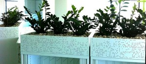 Indoor Plant Hire Robina with ZZ Plants