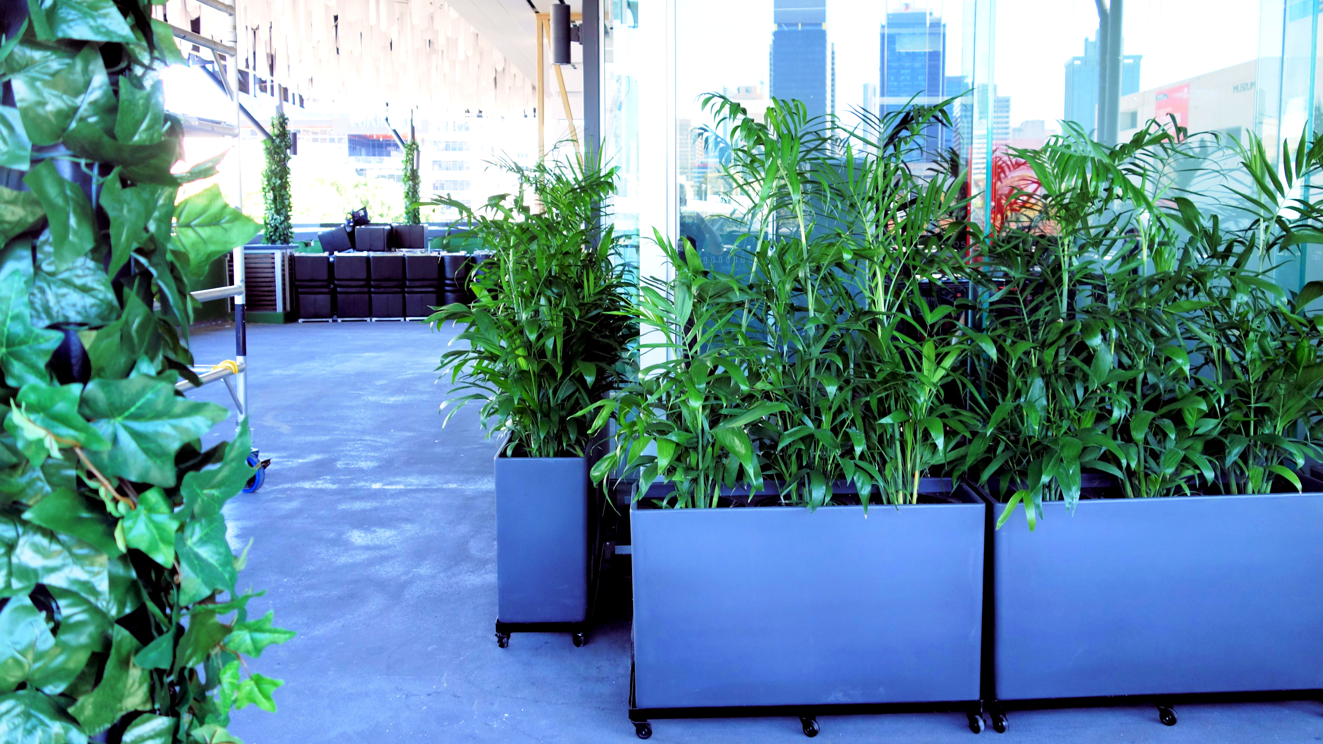 Showing grey floor with royal blue troughs holding bamboo palms