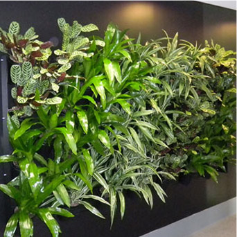 Showing the foliage in a green wall with all important lighting above.