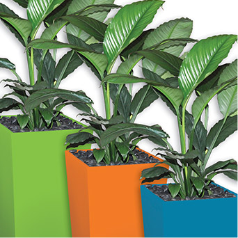 An image of three Urban Wedges in our company colours of bright green, orange and blue, planted with Spathiphyllum Sensations.