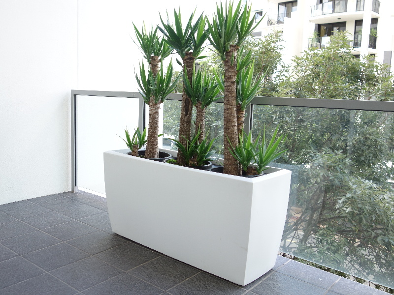 Showing a large white Cabriolet trough with three Yucca plants.