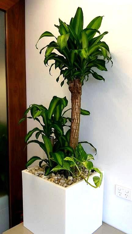 Showing a white Urban Cube with a Happy Plant.