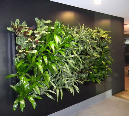 Green Walls Brisbane Ieq Indoor Plants