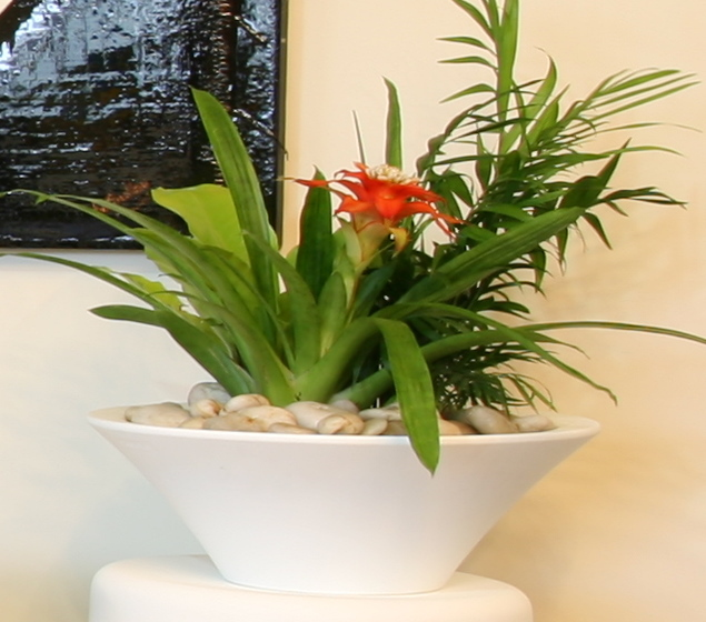 Showing an Urban bowl in white with an arrangement including a Bromeliad.