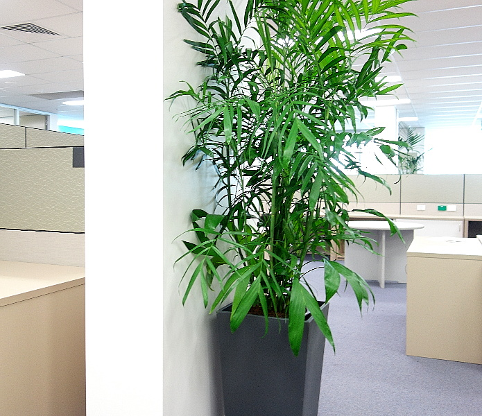 Showing a black Urban Wedge with Bamboo Palm