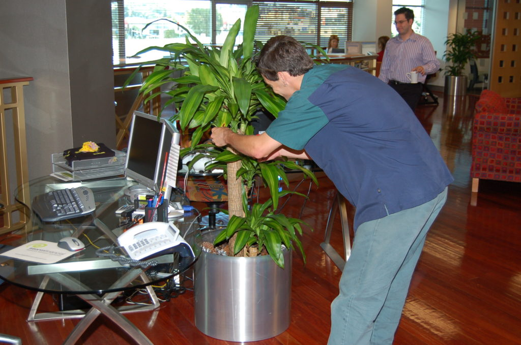 A serviceman triming a Happy Plant in a Stainless Steel cylindrical planter.