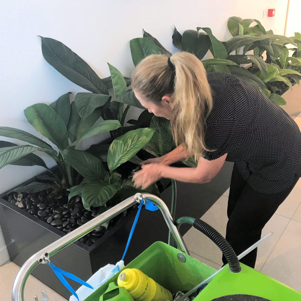 An image of our service staff maintaining the plants in a custom built planter.