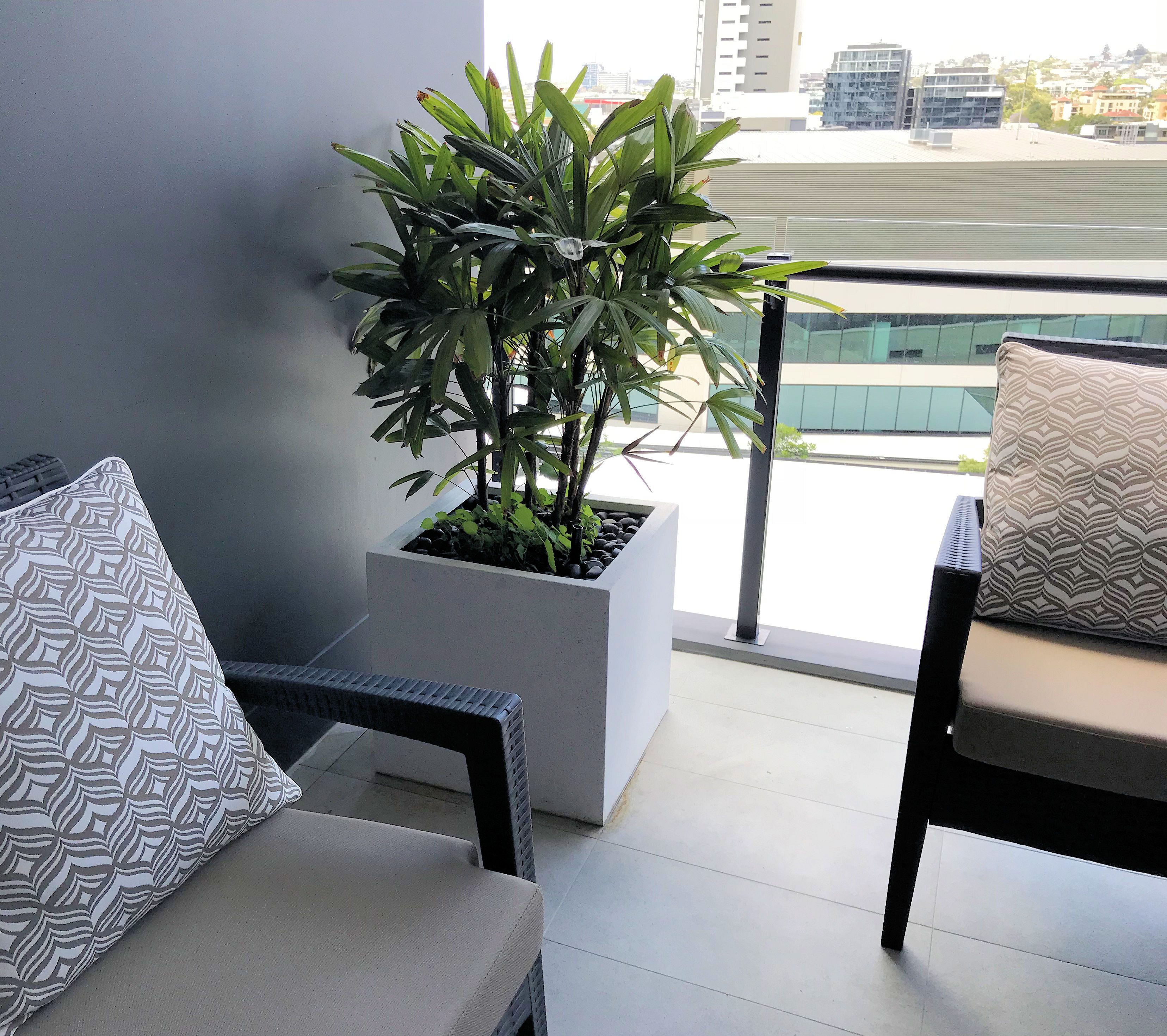 A balcony showing a Terrazzo Cube Planter in white with a Rhapis Palm.
