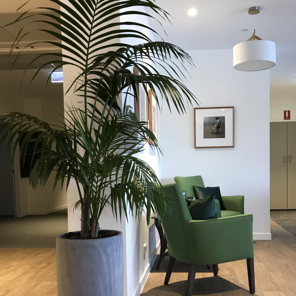 A Kentia Palm in a concrete coloured Hendra 66 planter