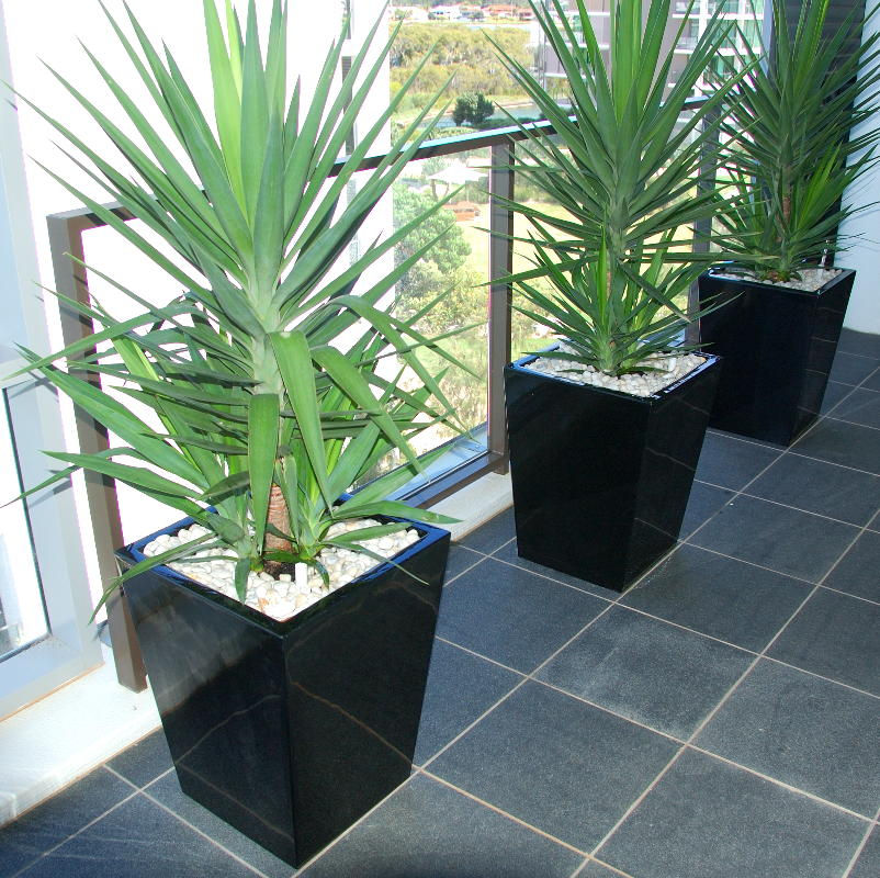 Showing three black wedge shaped planters with yucca plants on a balcony.