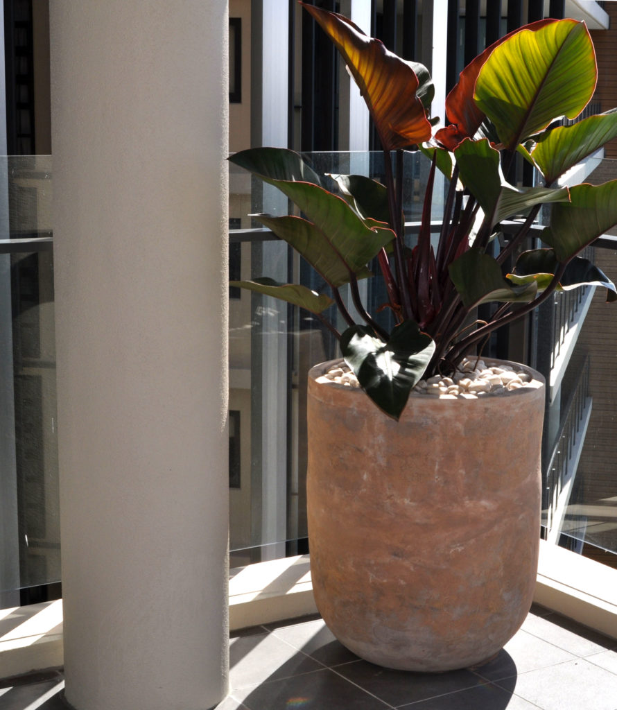 Showing a light brown Concrete Planter with a Philo Red Wings.