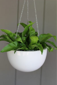 Showing a white Corinda Hanging Planter with a Spathiphyllum.