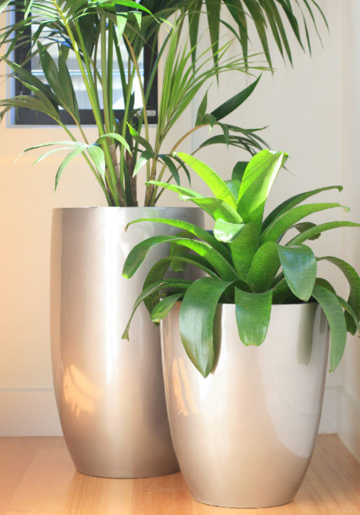Showing two Hendra Planters in stunning gold.