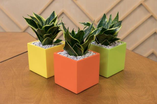 Showing three Milton 16 cube planters in yellow, orange and light green.