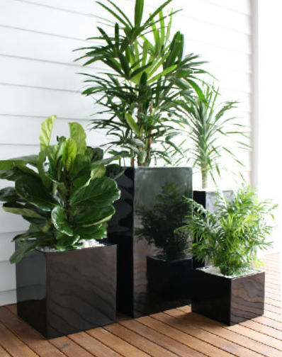 Showing three black cube shaped planters in three different sizes.