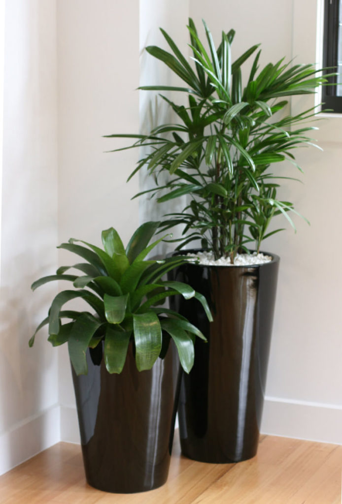 Showing two planters, a Rosalie 52 and 70 in black.