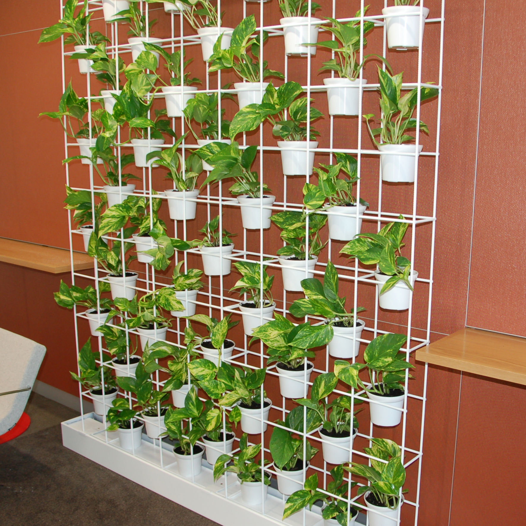 Showing a Schiavello Vertical Garden. It is basically pot plants sitting in a specially built white wire frame.