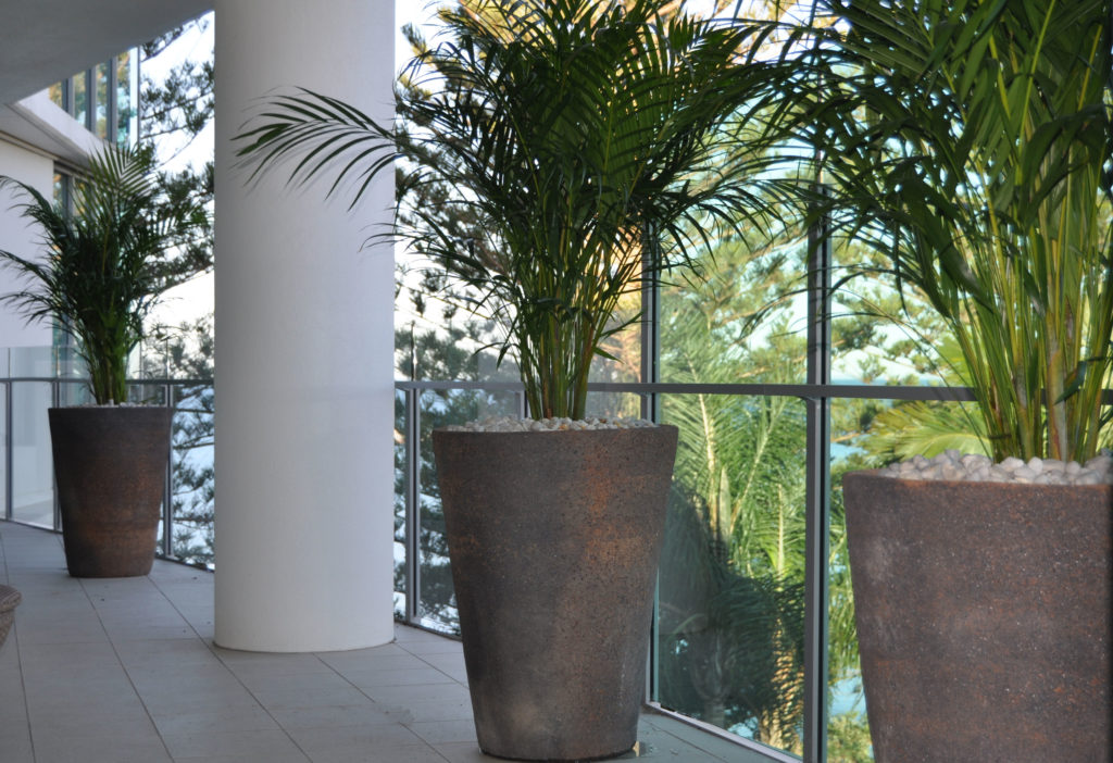 Showing a stone planter with a Golden Cane Palm on a balcony.