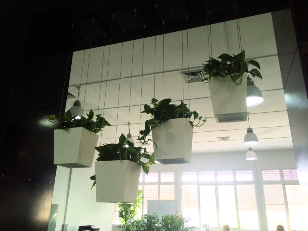 Showing four white Urban Desk planters hanging on stainless steel wires.