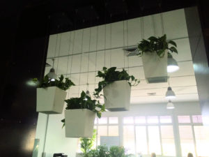 Showing hanging white Urban Desk Wedges. This image was taken just after installation, the plants have now grown and are amazing.