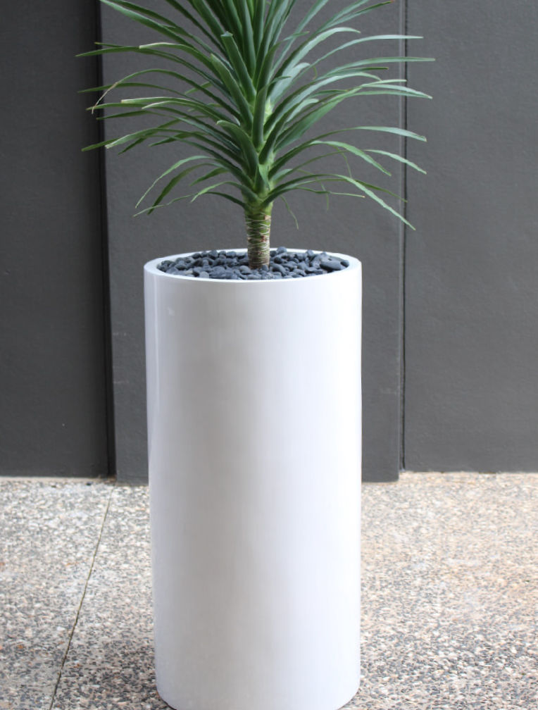 Showing a white Wilston 110 with a Dracaena.