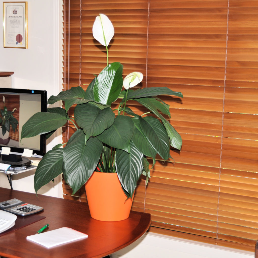An image of an orange Desk Planter with spath.