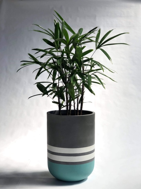 Showing a painted Cylinder (tall) planter in bands of colour, blue, white and grey with a Rhapis Palm.