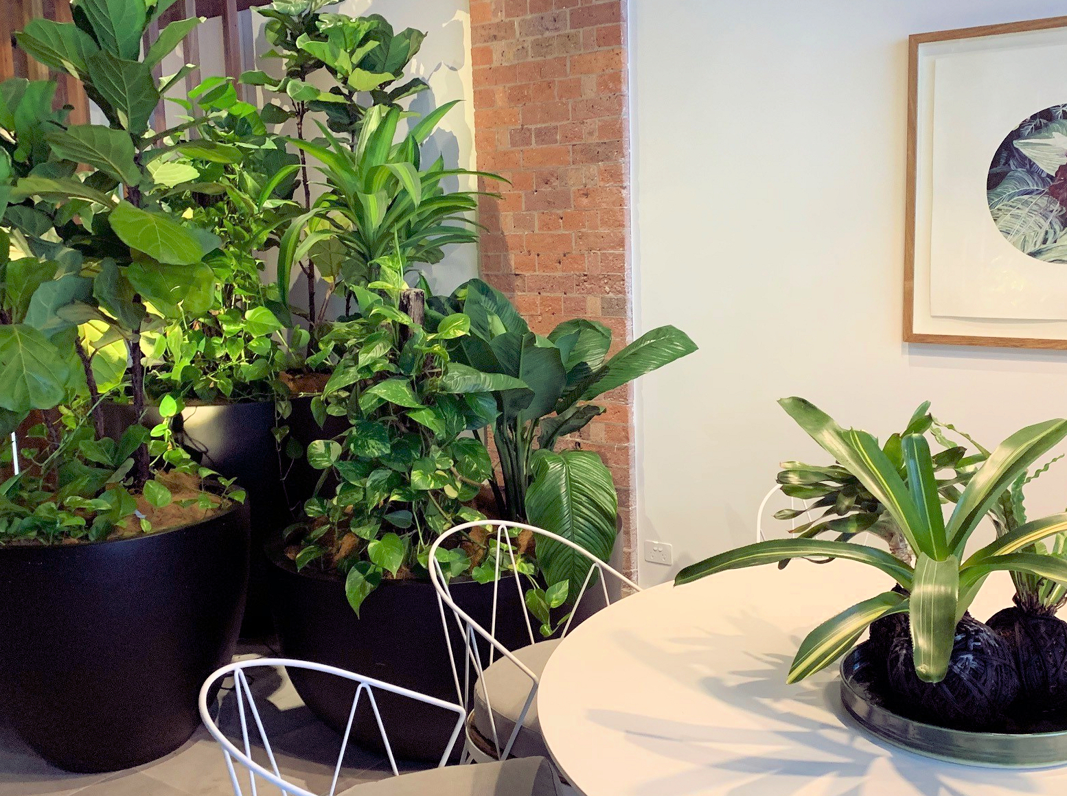 Showing a pothos growing on a totem among other lush plants.